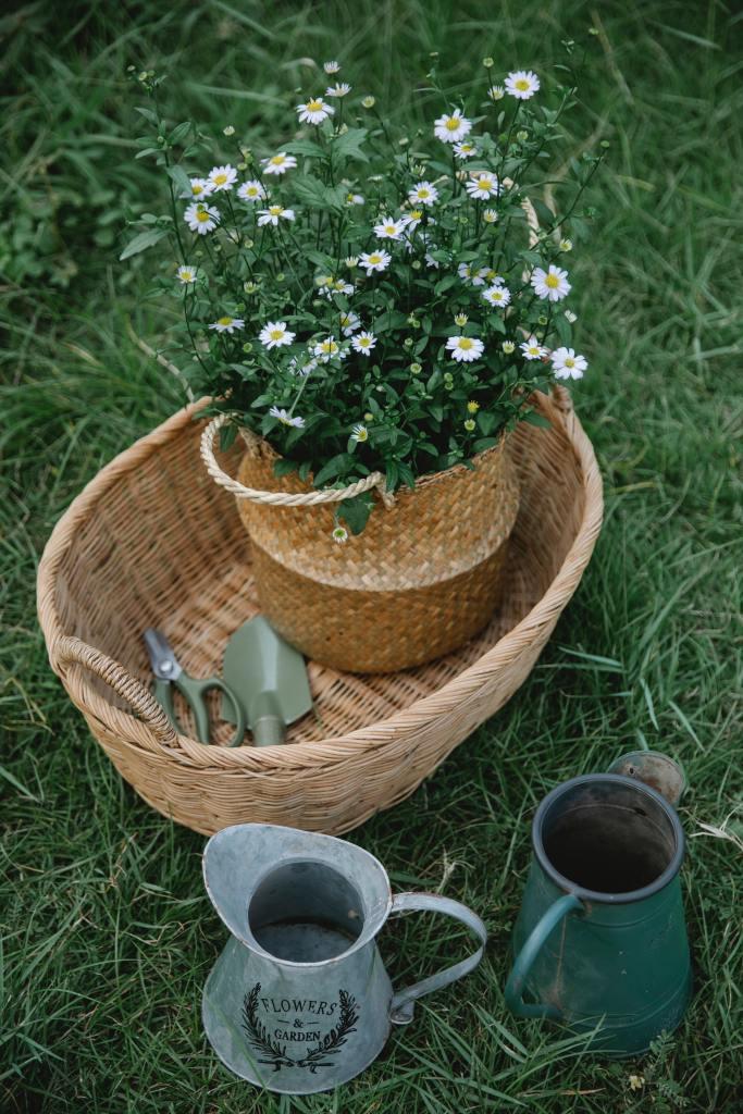 Jardinage et plantes