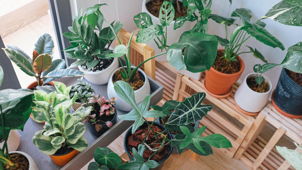 choisir ses plantes